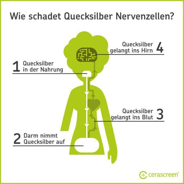 Wie Quecksilber auf Nervenzellen wirkt