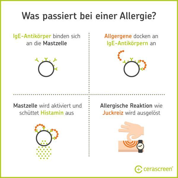 Was passiert bei einer Allergie im Körper?