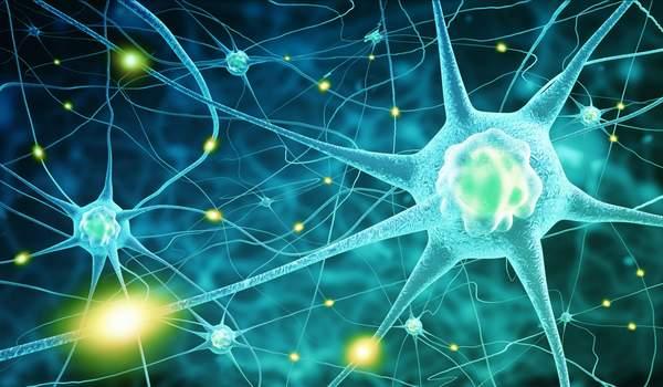 Nervenzellen - Vitamin B12 schützt Nerven